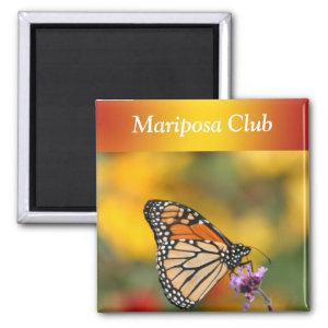 Monarch Butterfly In Search of Pollen Magnet starting at 4.20